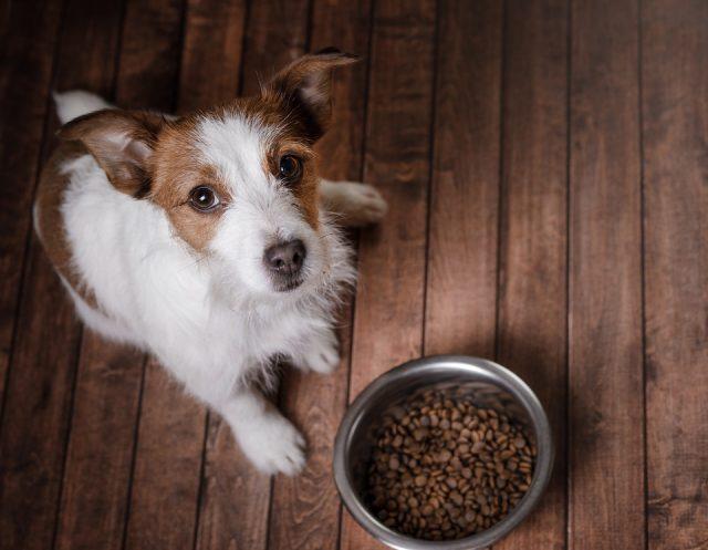 Les aliments à risques pour un chien